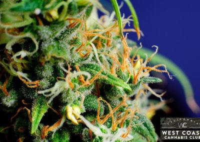 West-Coast-Cannabis-Club-Dispensary-Picture-01.jpg