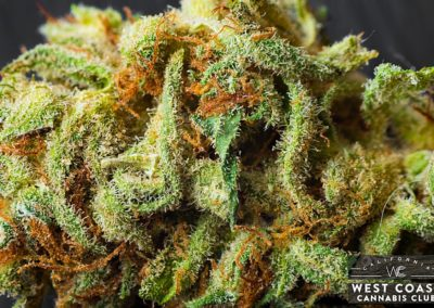 West-Coast-Cannabis-Club-Dispensary-Picture-04.jpg